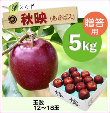 葉とらず秋映5キロ(贈答用)