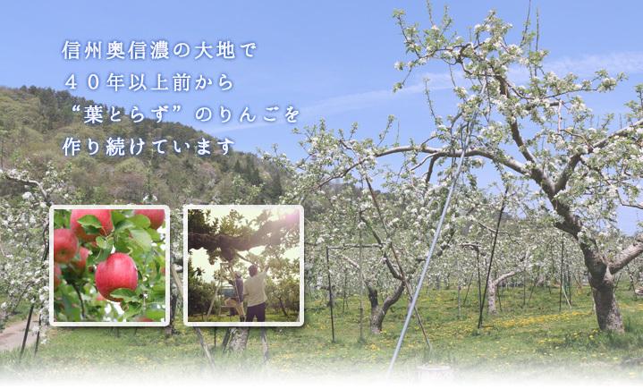 葉とらずりんごを作りつづけています