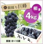 【予約】朝採りぶどう!種無し巨峰[4kg(8~10房)商品番号:B214]