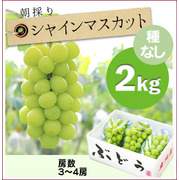 【予約】朝採りぶどう!シャインマスカット[2kg(3~4房)商品番号:M212]