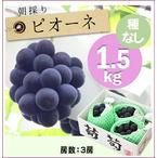 【予約】朝採りぶどう!ピオーネ[1.5kg(3房)商品番号:BP101]